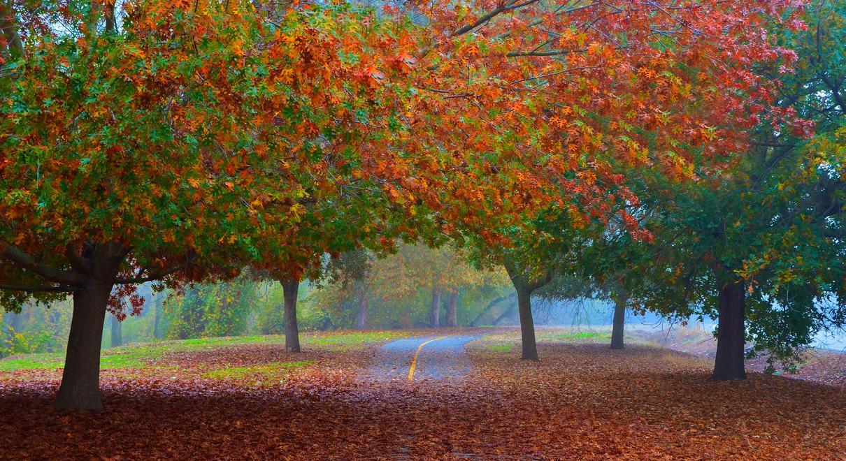 Fall Trees Along the Sacramento River Bike Trail by Marilyn958