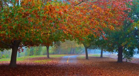 Fall Trees Along the Sacramento River Bike Trail
