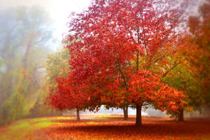 Red Tree in the Fog