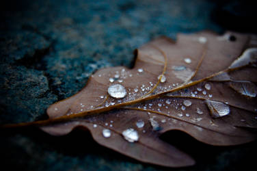 Cold Drops by thogro