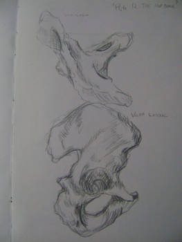 Anatomy - Hip Bones 1