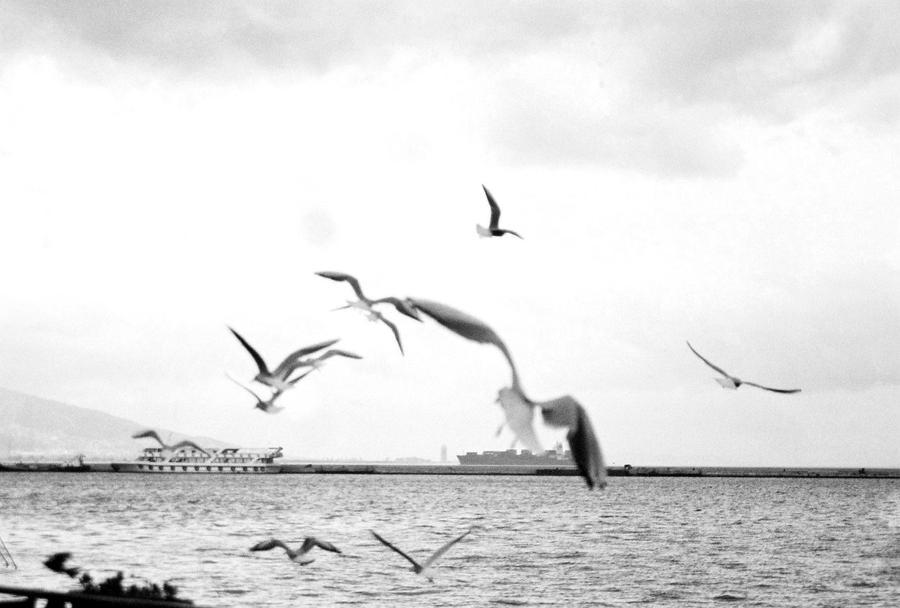 Seagulls around Kordon