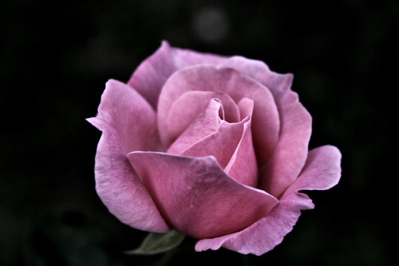 weary beauty