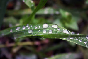 raindrops by esracolak