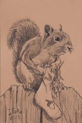 Nut Sock by sfolse