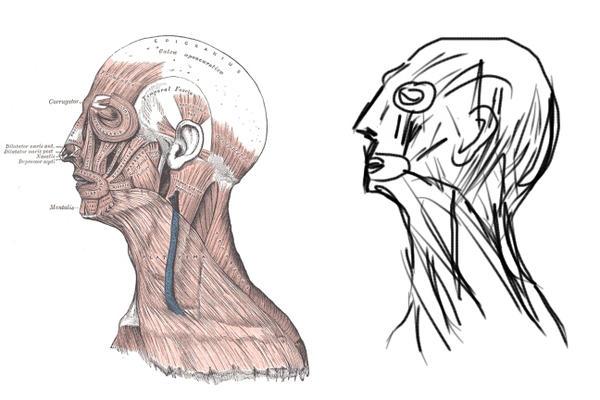 Human anatomy profile