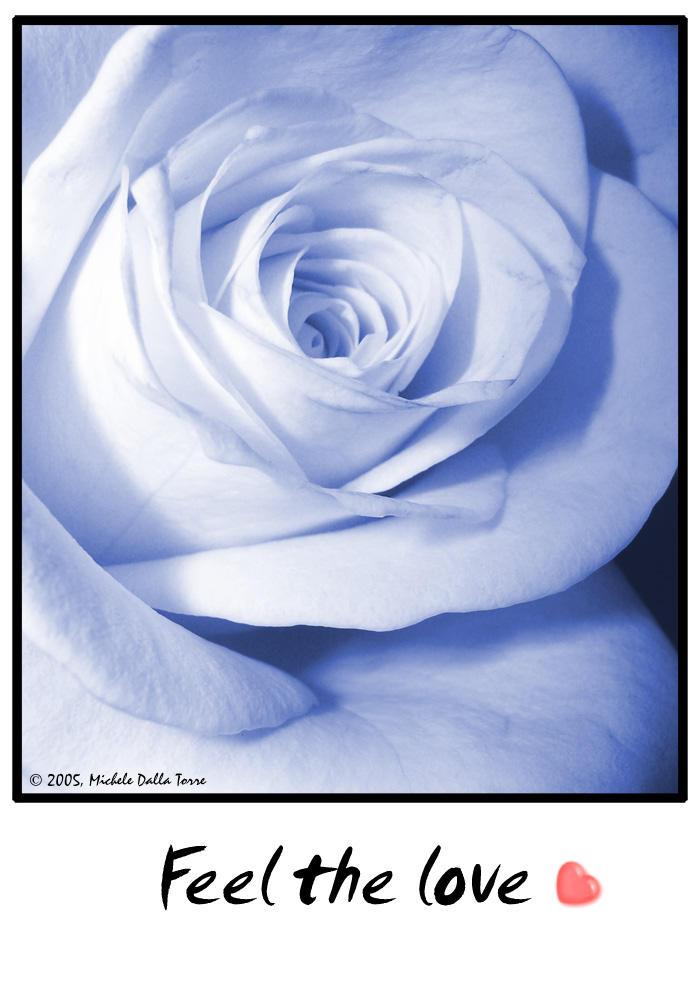 - Blue Rose - by mdt