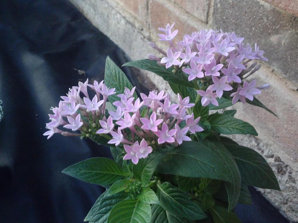 Purple Flowers2 by ThEmYsTERYcReW