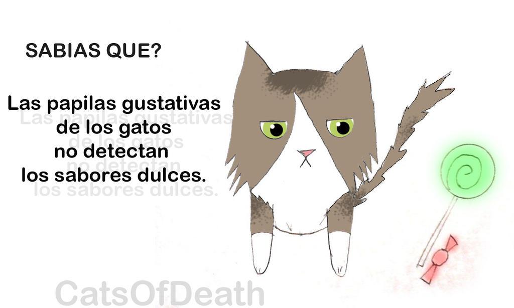 Gatito sabias que... Dulces by Catsofdeath