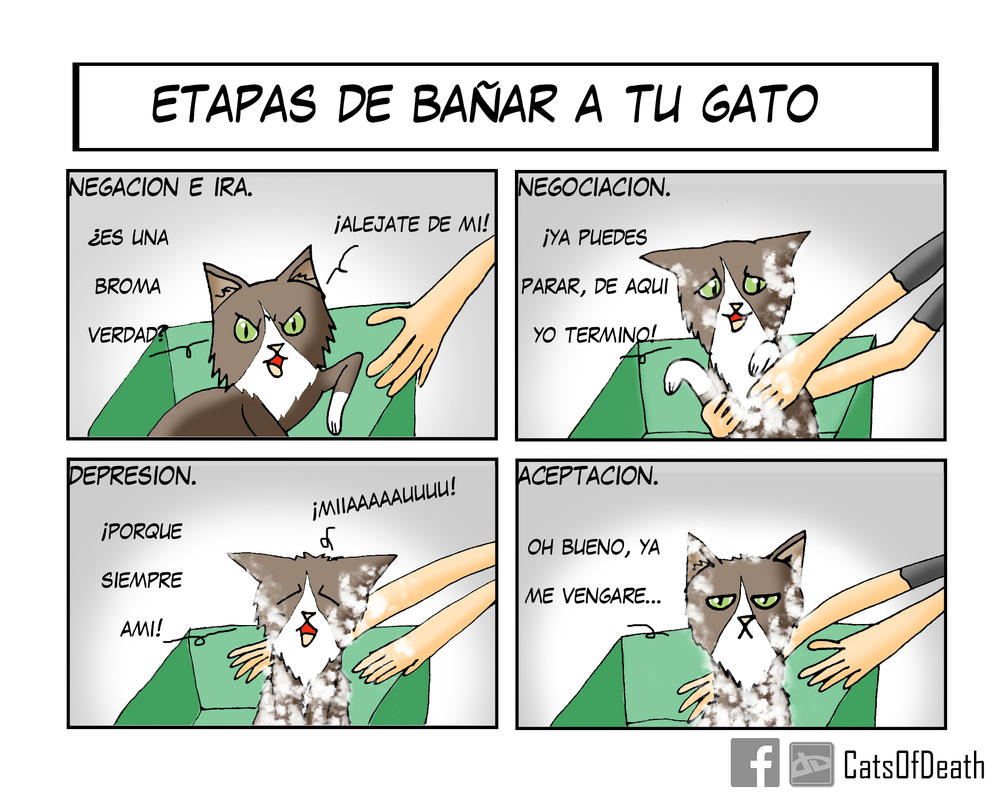 Gato by Catsofdeath