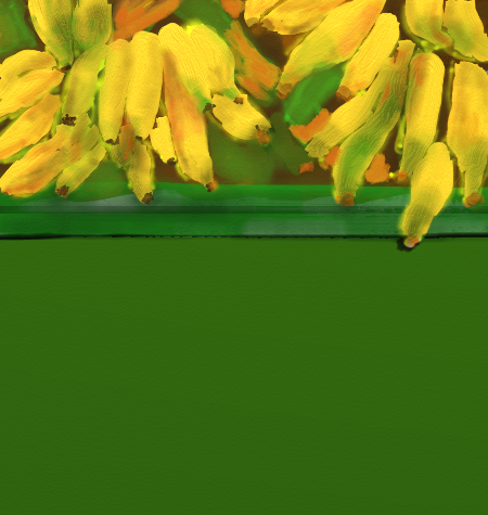 Bananas lovely bananas by teddybearcholla