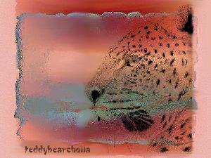 teddybearcholla's Profile Picture