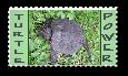 Turtle power by teddybearcholla