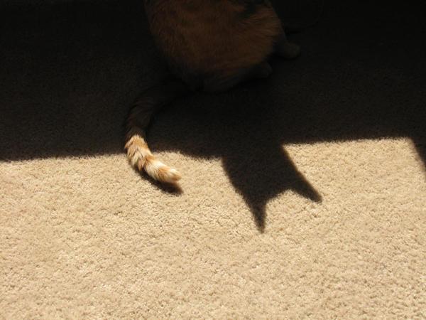 -stock- Shadow Cat -stock- by PixelMeBlu