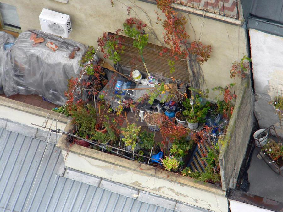 roof garden by werekiller