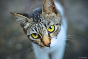 Street Kitty 012 by yahikothewhite