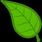 CM Leaf