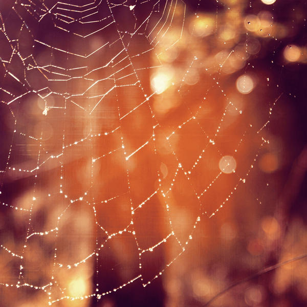 spider web with dew drops by JaneWolfskin