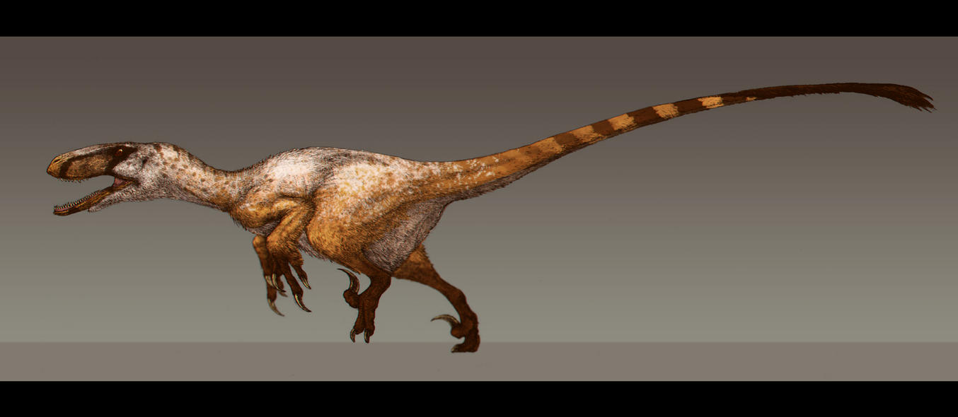 utahraptor ostrommaysorum by paleocolour on deviantart