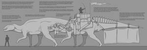 Shantungosaurus Saddle Infograph by Paleocolour