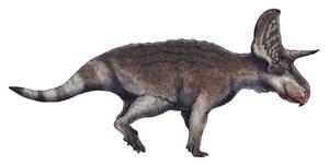 Turanoceratops tardabilis