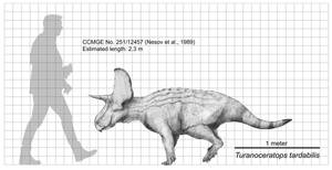 Turanoceratops tardabilis Size Chart by Paleocolour