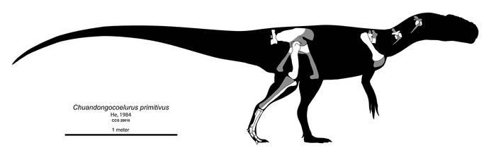 Chuandongocoelurus primitivus Skeletal Diagram by Paleocolour