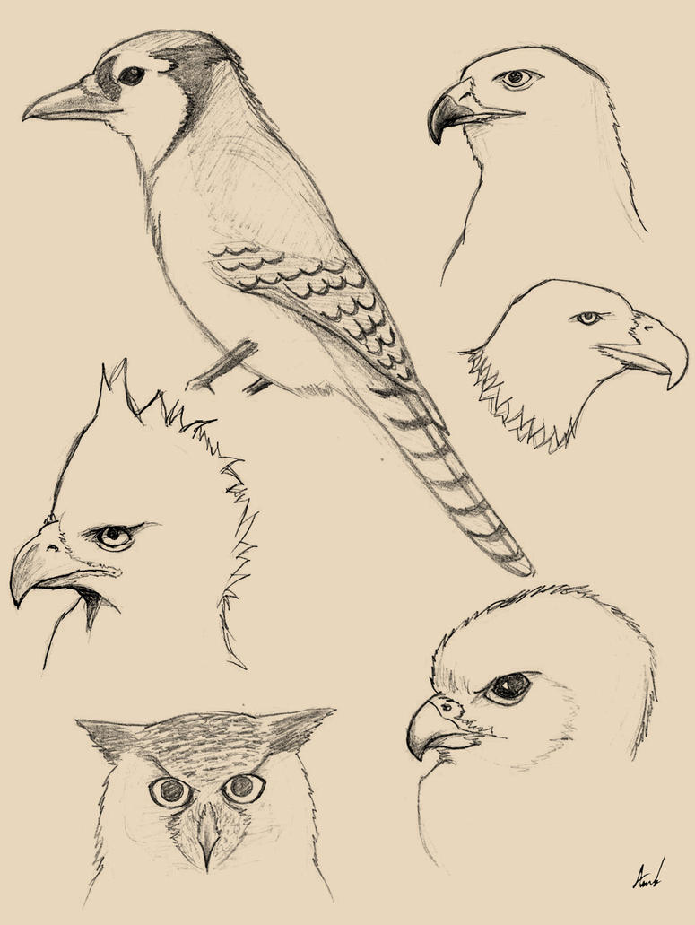 Birds sketches by M053AB