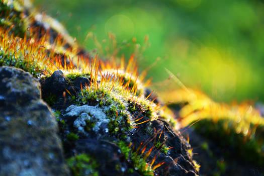 Autumn Moss