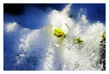 Ice'd Spring by Fabi-FR