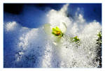 Ice'd Spring