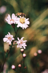 Wildflowers by releaserevolverenew