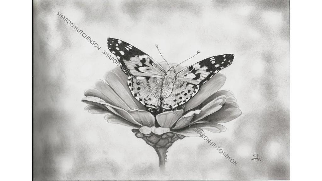 Wm Butterfly by Shazhutch