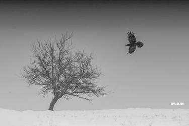 Winter by zewlean