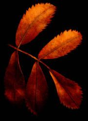 Five Leaves