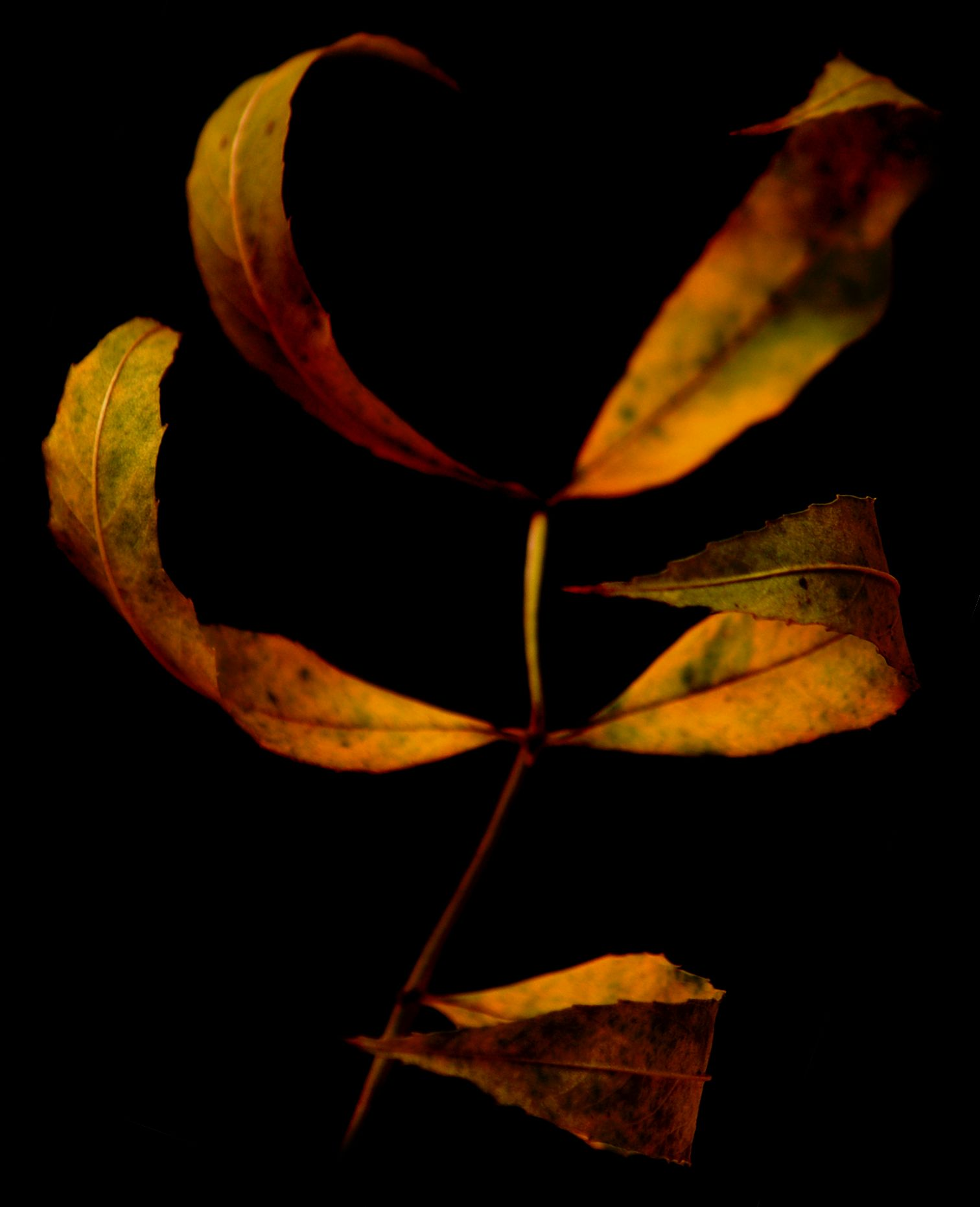 Clawed Leaves