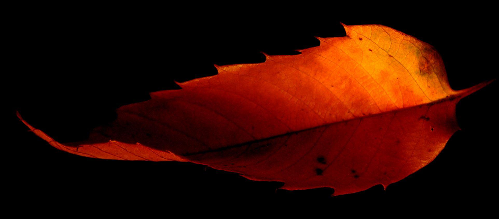 Twisted Leaf