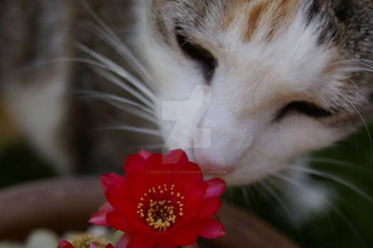 Demi sniffing cactus flower