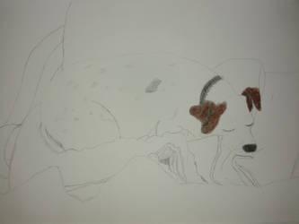 My dog by NatsumeHayate