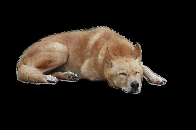Dog PNG 2