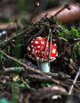 Real Nature - Mushroom :3: