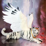 White Winged Tiger