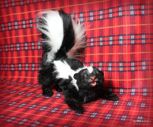 Skunk, fur toy