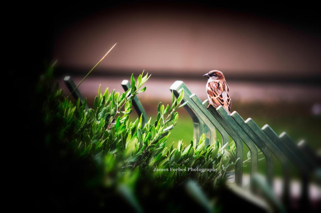Birdie by JForbes1701