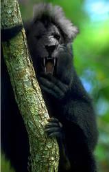 Monkey Lion by InfuserGod