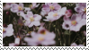 {f2u} japanese anemones by Pastel--Galaxies