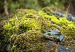 Frog by RunaCorner