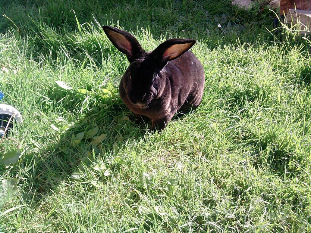 Rabbit 12 by Xx-Sexy-Tilly-xX