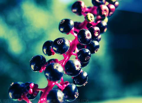 Berries... Berries