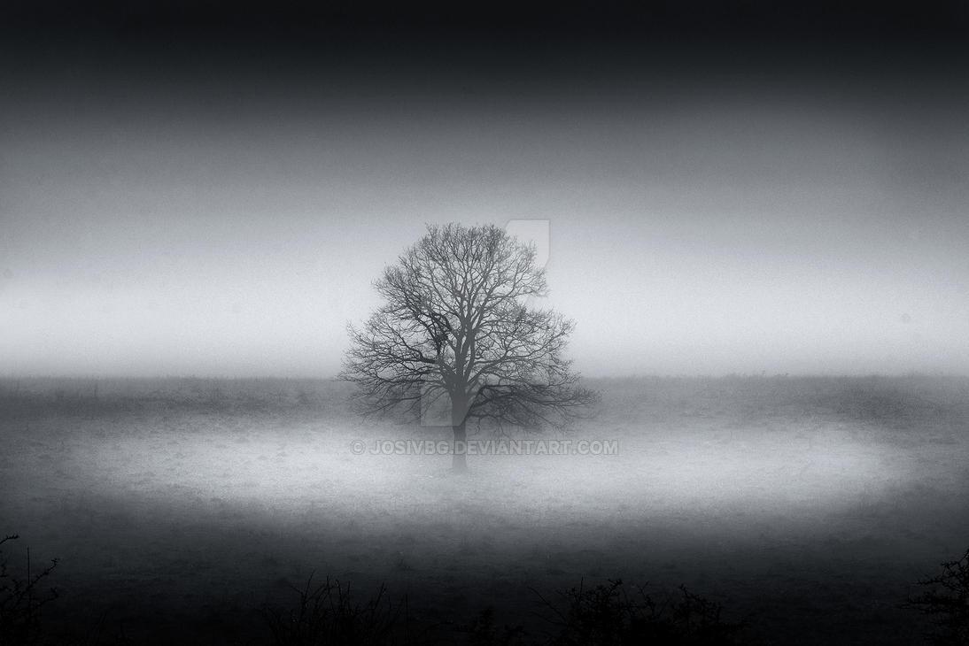 Forgotten tree by JosivBG